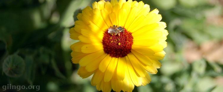 flowercilla