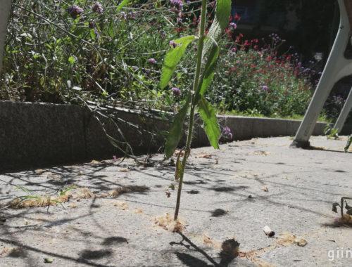 Hierbas silvestres creciendo bajo un banco